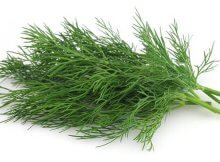 Dill Is An Aromatic Healthy Herb And Medical Plant