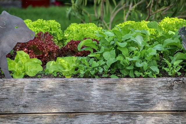 7 Reasons Why You Should Have An Organic Vegetable Garden